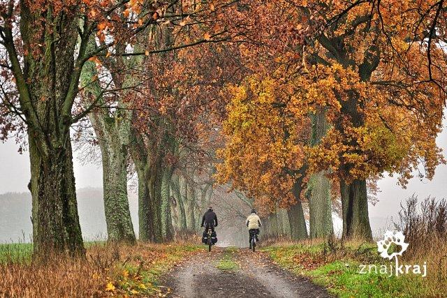 http://www.znajkraj.pl/files/styles/a/public/jesienni-rowerzysci-bory-tucholskie-2014-szymon-nitka-2619.jpg