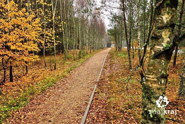 http://www.znajkraj.pl/files/styles/a/public/lesny-szlak-rowerowy-kaszubskiej-marszruty-bory-tucholskie-2014-szymon-nitka-2451.jpg
