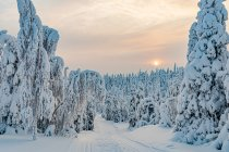 Atmosfera na fińskiej trasie biegowej