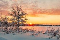 Biegówki podczas zachodu Słońca w Finlandii