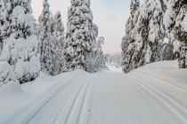 Biegówkowe ślady w Finlandii