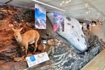 Bryła lodu w muzeum Muse