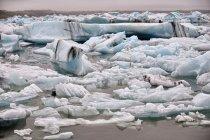 Bryły lodu w Jökulsárlón