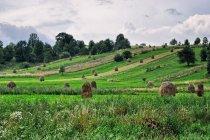 Bukowiński krajobraz