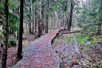 Drewniane pomosty na szlaku wokół jeziora Wigry