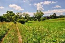 Droga biegnąca przez Łupków