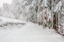 Droga do Jamrozowej Polany