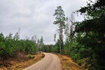Droga do Płaskiej