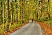 Droga przez Lasy Mirachowskie