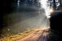 Droga przez Puszczę Augustowską