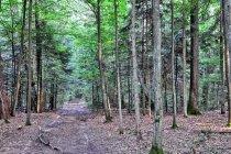 Droga przez rezerwat Lubiaszów