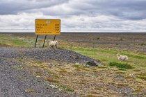 Droga przez równinę Skeiðarársandur