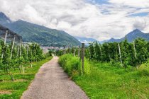 Droga rowerowa - dolina Valsugana