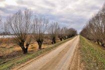 Droga rowerowa koło Gorzowa Wielkopolskiego