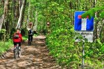 Droga rowerowa w lesie