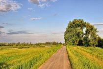 Droga rowerowa za Uściem Solnym