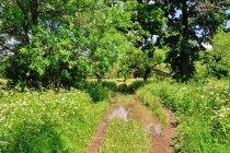 Droga w Łupkowie