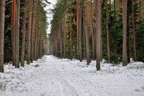 Dukty leśne w Puszczy Piskiej
