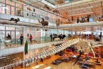 Efektowne wnętrze trydenckiego muzeum