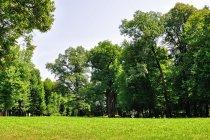 Europejskie Drzewo Roku 2017 w Wiśniowej