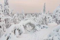 Fantazyjne, śnieżne kształty koło Ruki