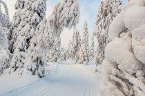 Finlandia, śnieg i narty biegowe