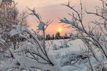 Fińskie Słońce