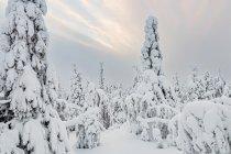 Fińskie zimowe klimaty