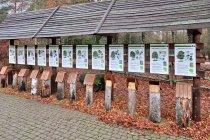 Gatunki drzew w ogrodzie edukacyjnym Nadleśnictwa Płaska