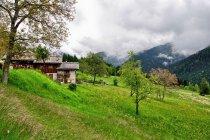 Górskie krajobrazy w okolicach Madonny di Campiglio