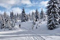 Izerski szlak narciarski
