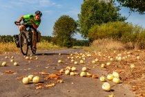 Jabłka na trasie rowerowej Odra-Nysa