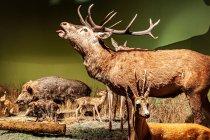 Jelenie, sarny, dziki...