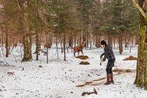 Jelenie wybiegające z lasu