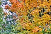 Jesień na Wiślanej Trasie Rowerowej