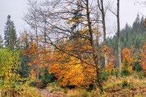 Jesień nad Krężelką