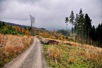 Jesień nad Szarculą