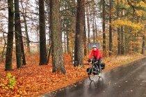 Jesień w Borach