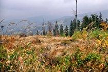 Jesień w górach Beskidu Śląskiego