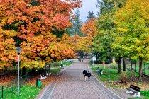 Jesień w parku w Ustroniu