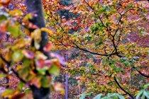 Jesień w wydaniu beskidzkim
