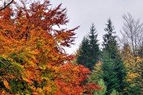 Jesienna droga w kierunku Stecówki