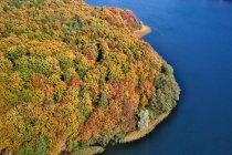 Jesienny las nad Jeziorem Ostrzyckim