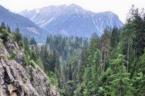 Kanion Albuli