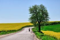 Kociewskie Trasy Rowerowe - szlak Grzymisława