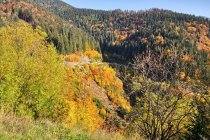 Kolory jesieni Tatr