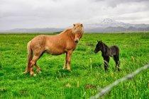Konie z Leirubakki