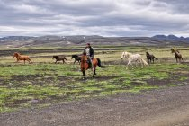 Konie zganiane z gór Islandii