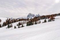 Krajobraz Alpe di Siusi