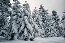 Krajobraz w Beskidzie Niskim